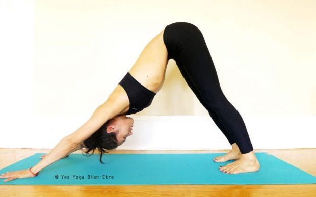 Adho Mukha Svanasana la Posture du Chien Inversé par Yes Yoga Bien Etre
