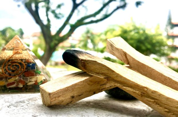 Plantes sacrées pour purifier: Palo Santo, le bois sacré
