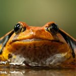 Eat That Frog by Brian Tracy: Notes