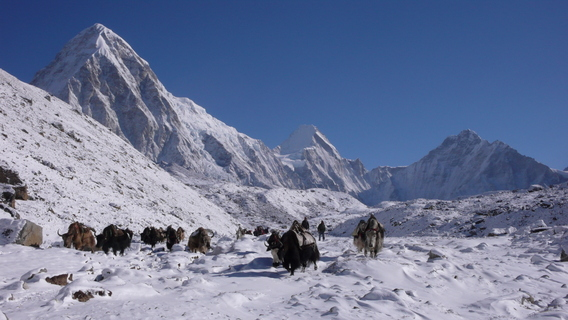 Everest-Nepal-Young3-568