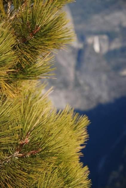 Yosemite-ElCapitan-NevadaFall-YExplore-Backpacking-DeGrazio-Apr2014