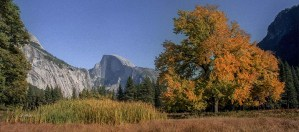 Yosemite-HalfDome-Maple-YExplore-Golub-1983