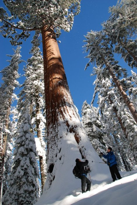 Yosemite-Tuolumne-Snowshoe-YExplore-DeGrazio-DEC2012