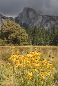 September 2016 Yosemite Instagram
