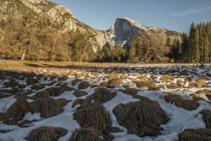 Yosemite Season's Greetings