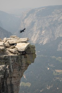 Soaring Above Half Dome