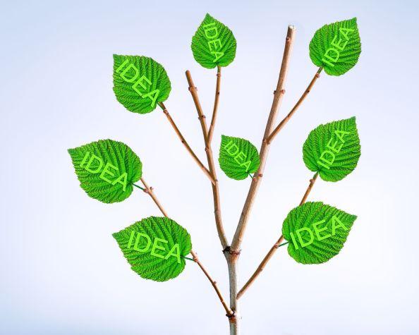 branche d'arbre et feuilles avec idées