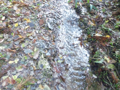 雨で小川に131121_103750.jpg