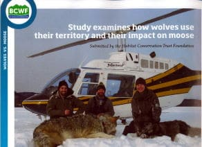 image BCWF wildlife study wolves impact on moose