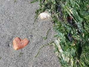 Vancouver Beach walk