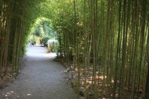 Villa Ephrussi jardin japonais