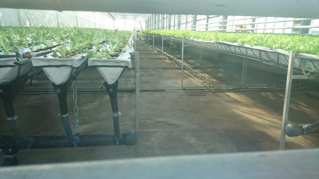 レタス栽培の設備