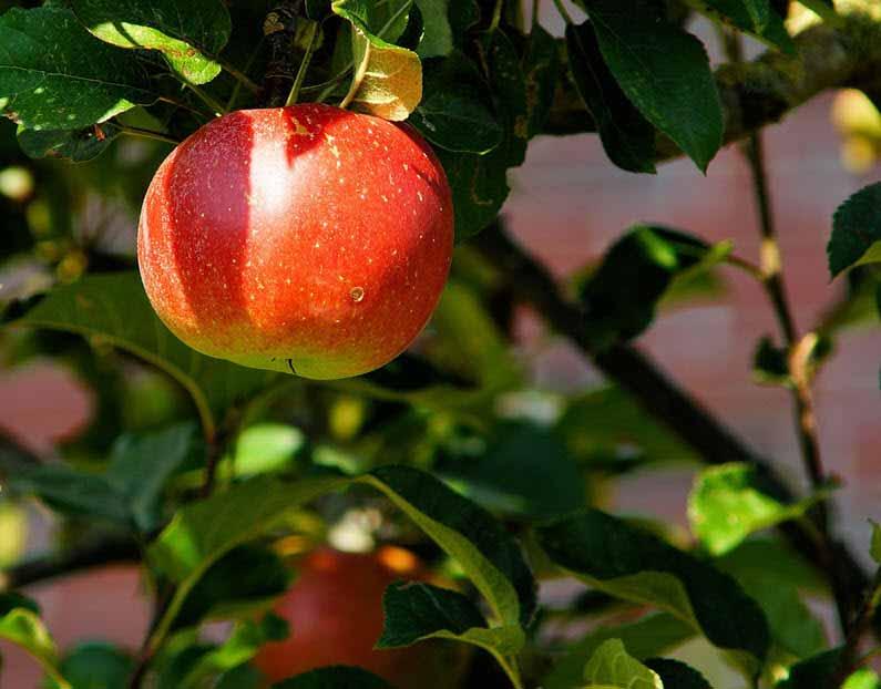 Procesoptimering | Pluk de lavthængende frugter sammen med Your Missing Link