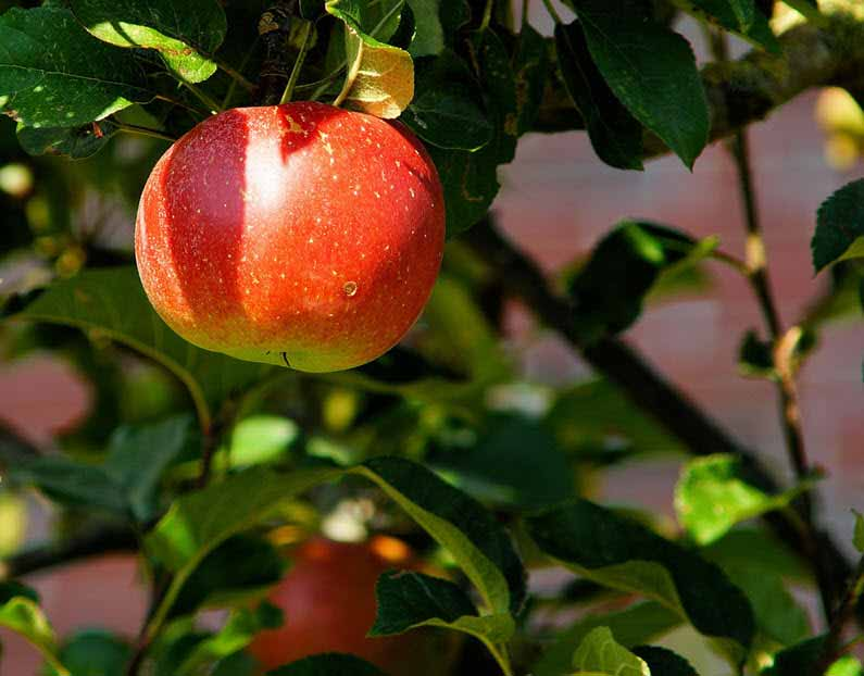 Process optimisation: Pick the low hanging fruit in collaboration with Your Missing Link