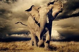 elefante1