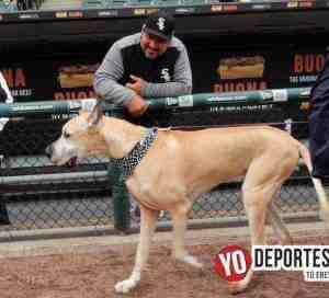 Cientos de perros invaden estadio de los Medias Blancas de Chicago