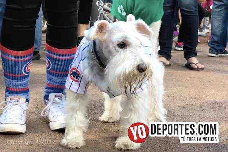 White Sox Dog Day Cubs