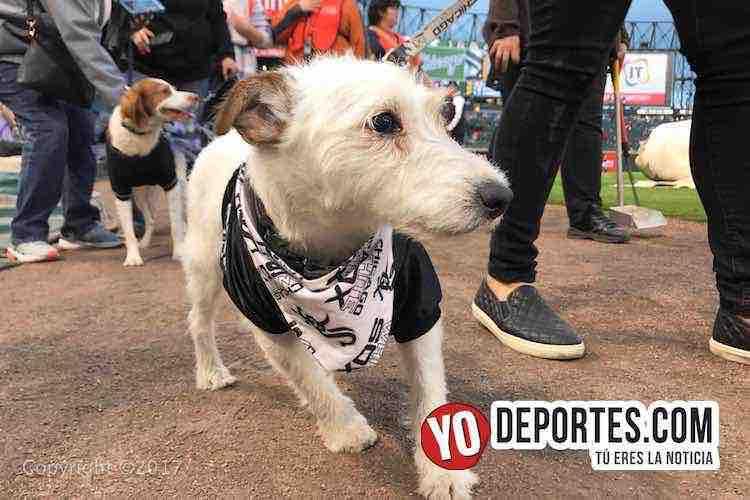 White Sox Dog Day-chicago medias blancas
