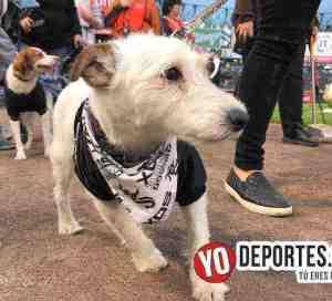 Fanáticos y sus mascotas desfilan por el estadio de los White Sox en el último Dog Day