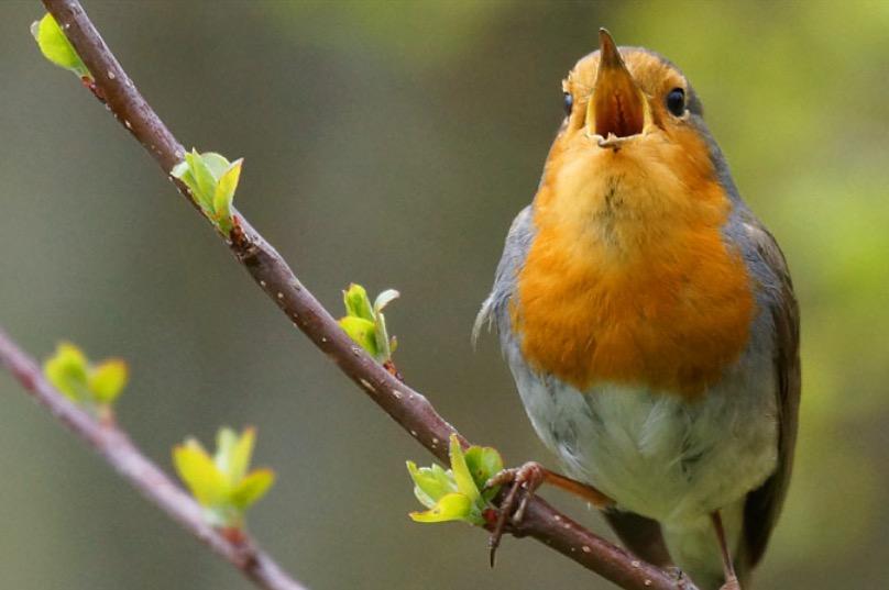 YOGA _ den Vögeln beim Singen zuhören