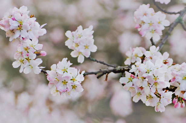 primavera yoga risveglio disintossicare fegato