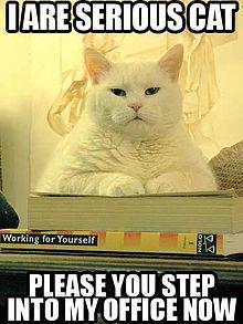cat office dc yoga