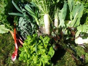 spring-recipe-yoga-garden