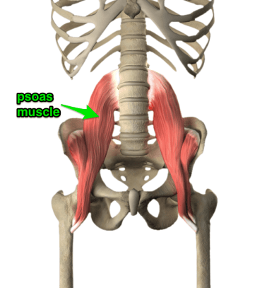 Image result for psoas