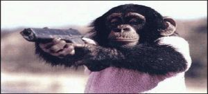 chimpanzee with a glock