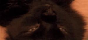 kitty-yoga-yoganomics