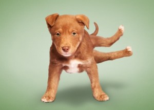 funny-yoga-puppies2