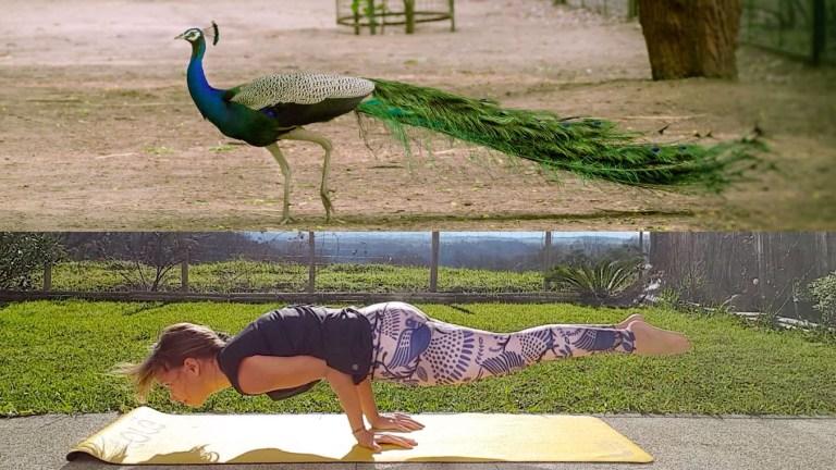 posture-paon-yoga-1