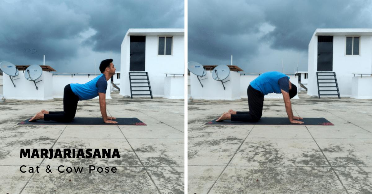 Marjariasana - Cat and Cow Pose - Yoga with Ankush