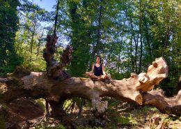 Meditación en el bosque
