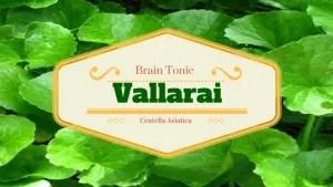Vallarai – The Brain Tonic - Yogi's Herbs
