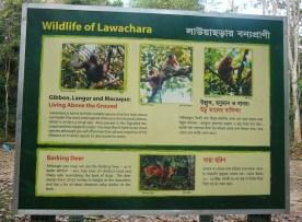 Lawachara Rainforest at Kamalganj in Moulvibazar