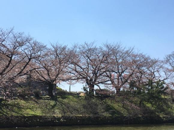 明治通りからお濠を挟んで桜の木を臨む