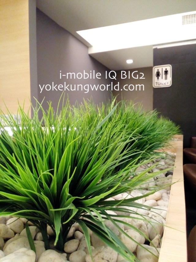iq-big2-photo-02