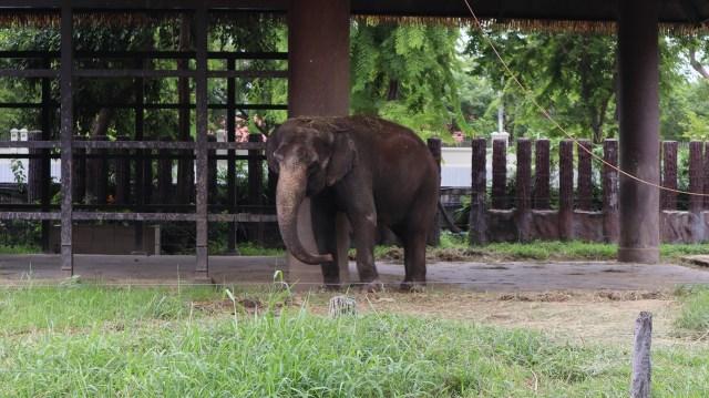 Dusit zoo Thailand