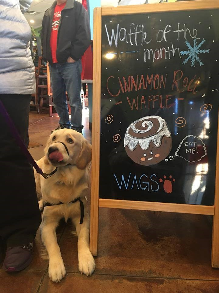 Yola's Cafe Waffles for Charity - Wags