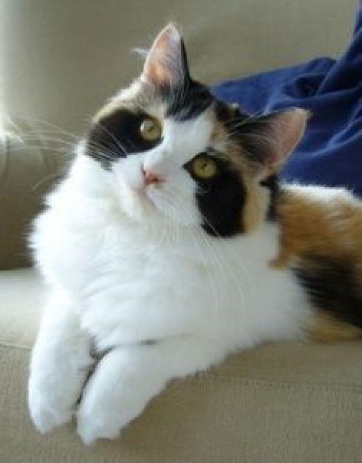 keisčiausi kačių kailiai (18)