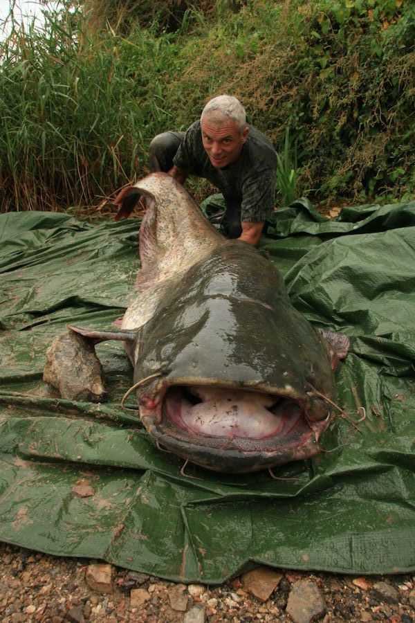 RIVER MONSTERS host Jeremy Wade with Wels catfish.