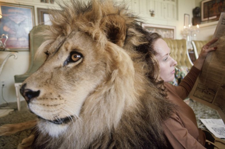 Subject: Neil the pet Lion with Tippi Hedrun reading a newspaper in her home in Sherman Oaks, California. May 1971 Photographer- Michael Rougier Time Life Owned Merlin- 1200534