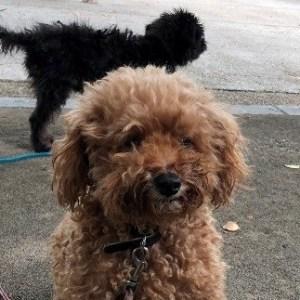 小田和正2019 首里犬 誘拐される! 公開捜索依頼っ。お願いです!レオン君を返して!<m(__)m>【続報(犯行日時等)を文末に追記しました。】