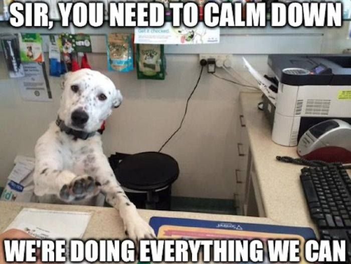 "Manager Dog says, ""Sir, you need to calm down, we're doing everything we can."""