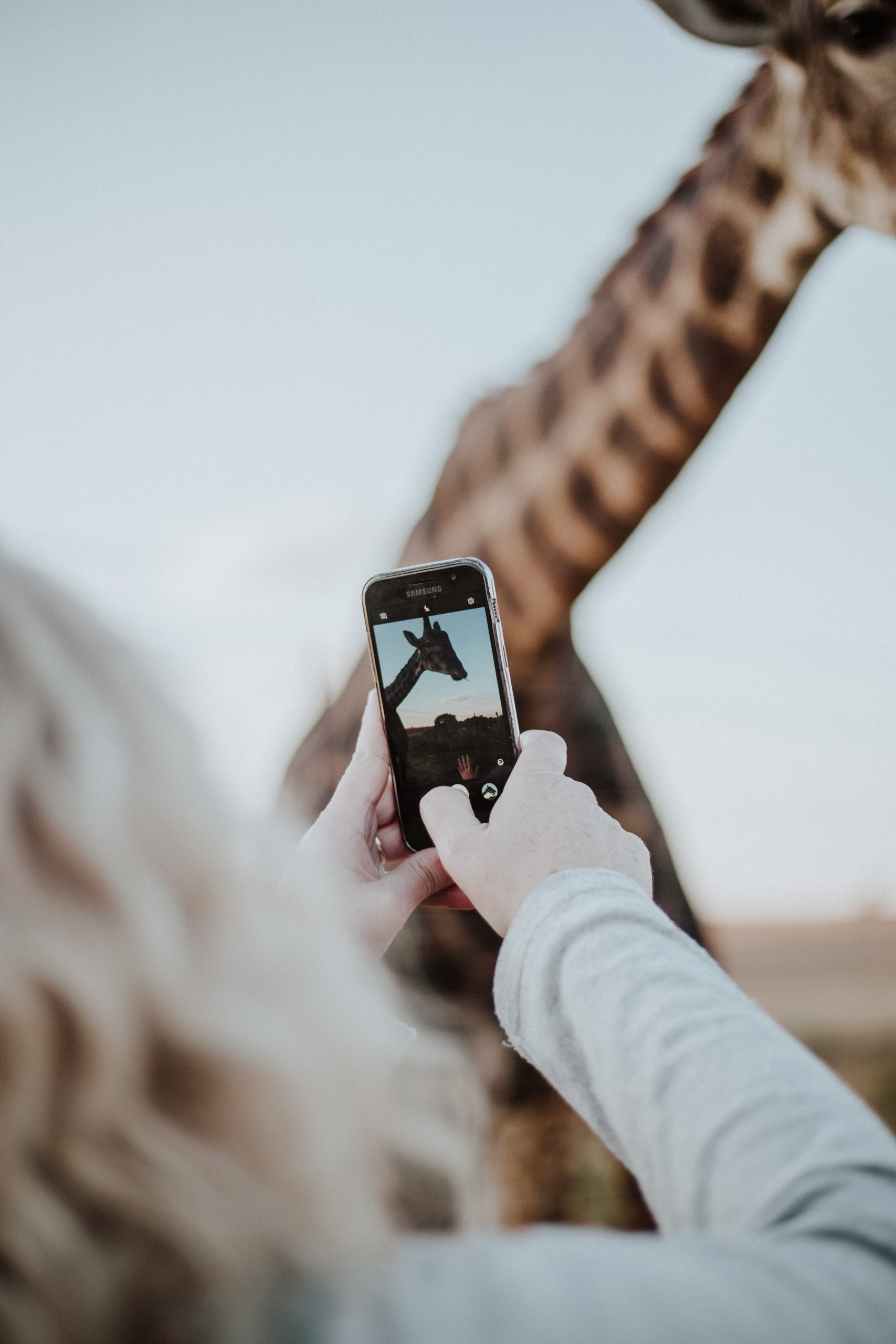 A white woman with blonde hair holds her smart phone up to take a picture of the giraffe standing directly in front of her.