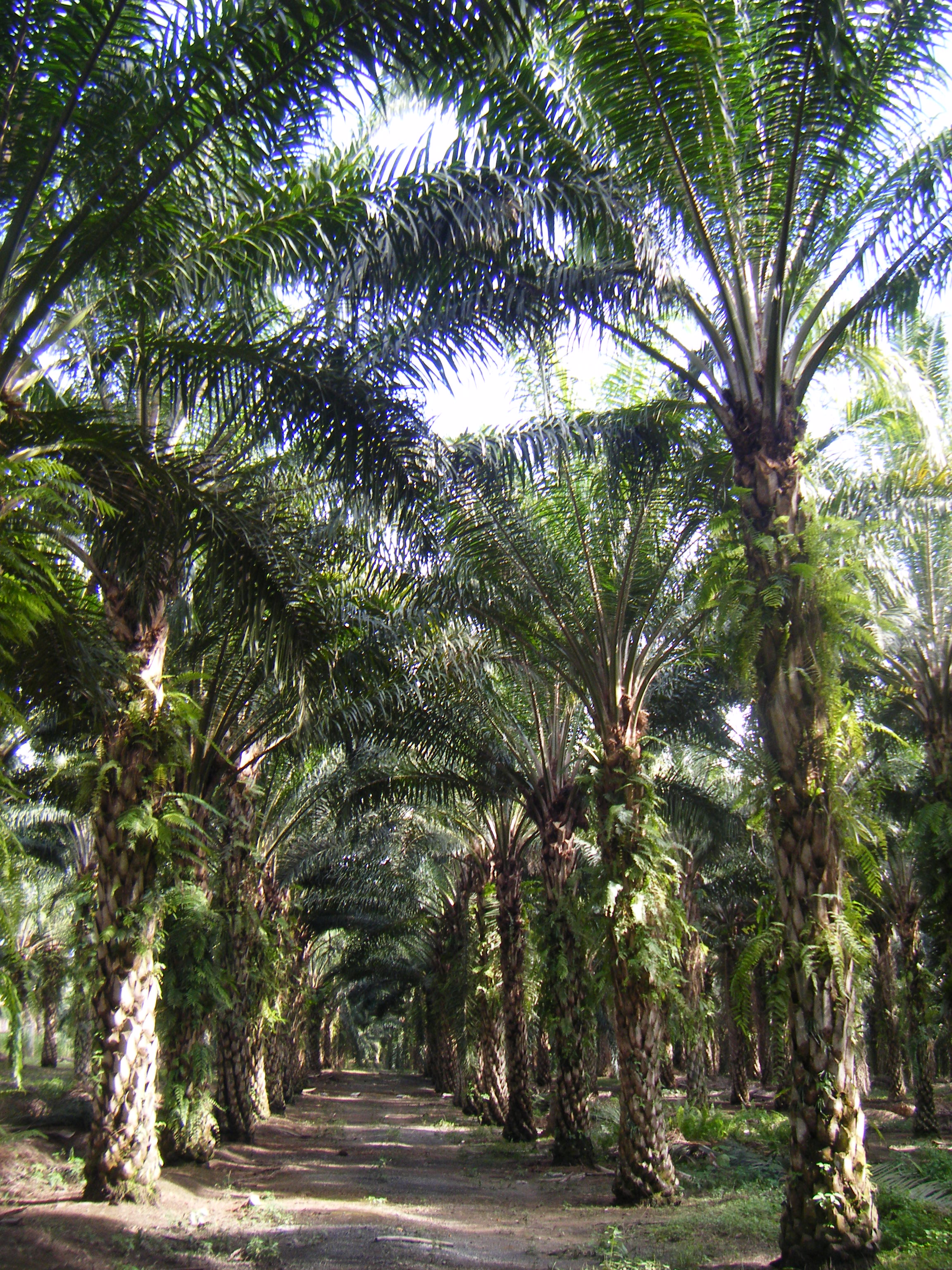 Launch of new network to improve sustainable palm oil
