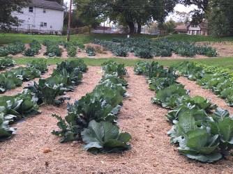 Fall vegatables. Oct. 24, 2016.