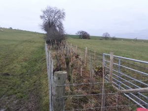 The completed hedgerow