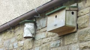 Bird boxes in Hepdendale, Hawes